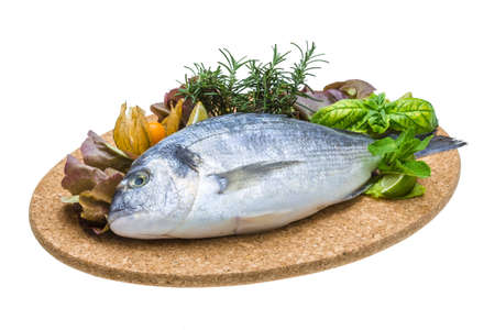 Fresh raw dorada Stock Photo - 19627444