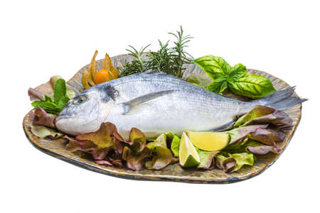 Fresh raw dorada photo