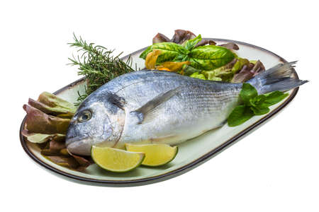 Fresh raw dorada Stock Photo - 19628268