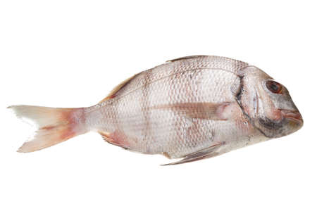 Raw porgy photo