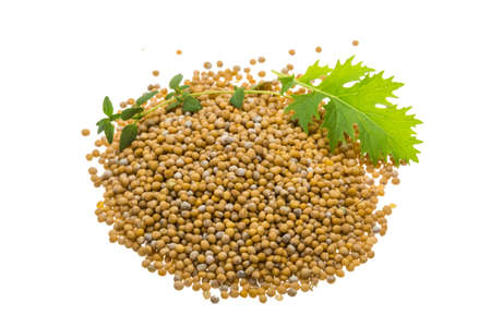 Mustard seeds with herbs isolated photo
