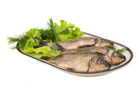Raw Crucian on the plate with dill Stock Photo - 21439337