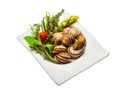 Escargot with asparagus, rosemary, thymus and tomato Stock Photo