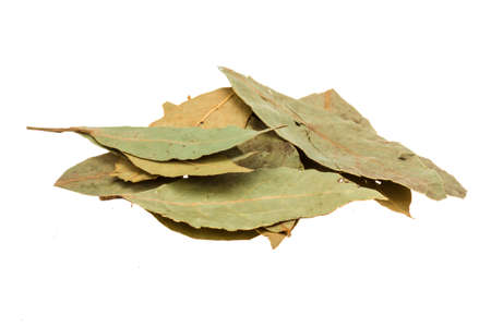 evergreen wreaths: Laurel leaves isolated