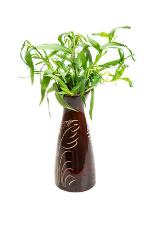 Tarragon isolated photo