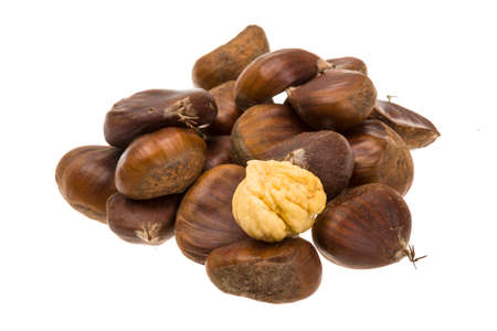 Chestnut isolated on white
