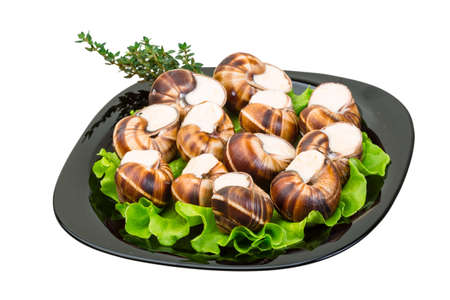gastronomic: Escargot with cheese sauce Stock Photo