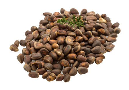 Cedar nut heap isolated on white photo