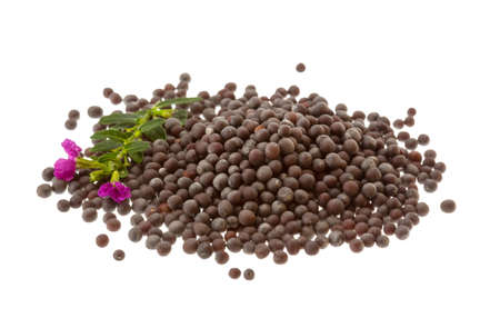 Black mustard seeds isolated on white Banque d'images
