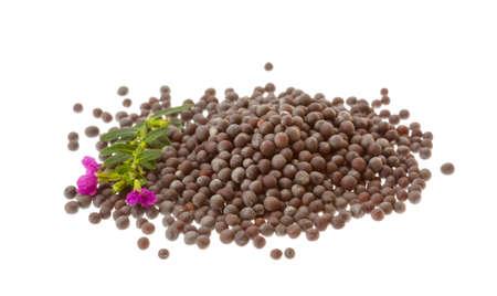 semen: Black mustard seeds isolated on white Stock Photo