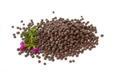 brassica: Black mustard seeds isolated on white Stock Photo