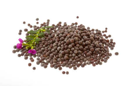 Black mustard seeds isolated on white photo