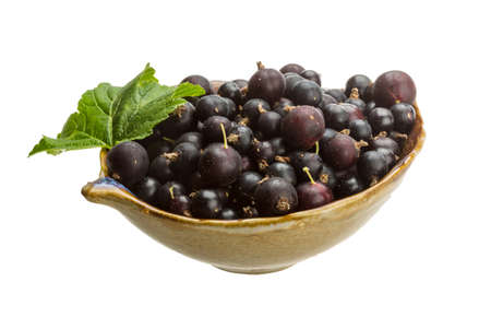 Black currant with green leaf photo