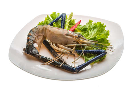 Big Freshwater prawn ready for cooking photo