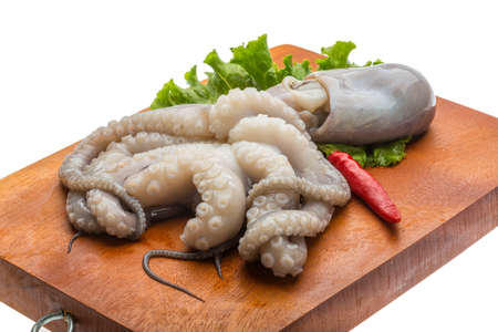 octopus: Raw octopus ready for cooking Foto de archivo