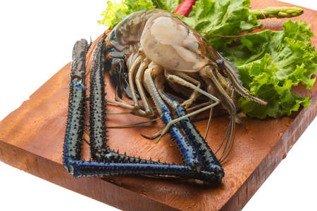 Big Freshwater prawn ready for cooking Stock Photo