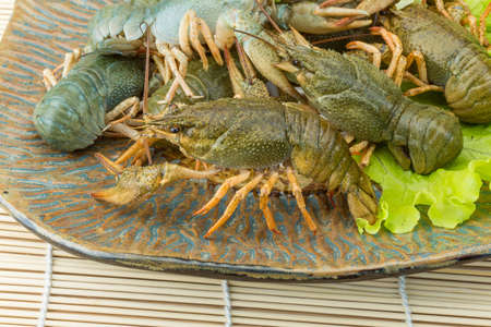 Raw Crayfish in the bowl with dill photo