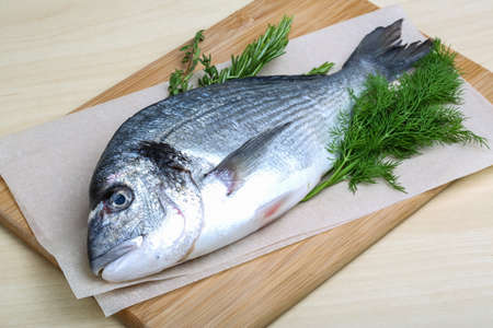 dorado fish: Raw dorado fish with dill, rosemary and thyme