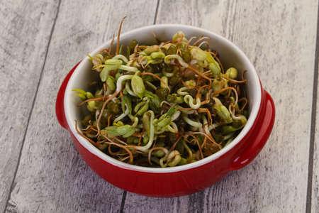 Mash bean sprout in the bowl Reklamní fotografie