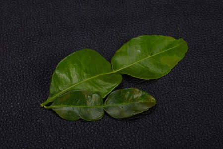 Kafir lime leaves - addition for Asian cuisine soup Stock Photo