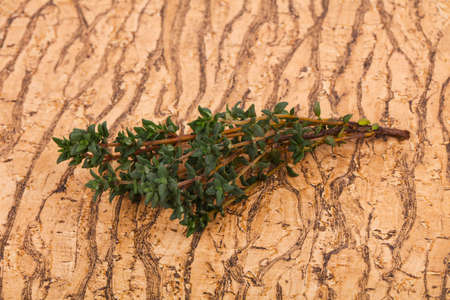 Green Thyme branch - spice for cooking