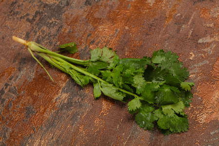 Fresh ripe  Green cilantro leaves spice Stock Photo