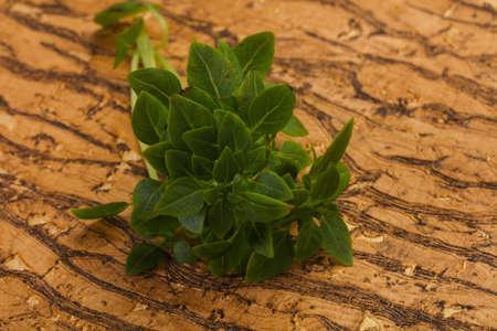 Green Basil leaves - aroma herbs Stockfoto