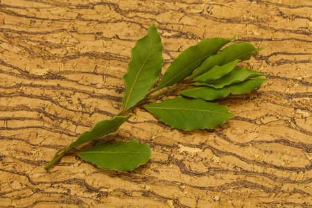 Green laurel leaves on the branch - for cooking