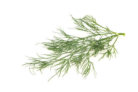 Fresh green dill herb branch ready for cooking Stockfoto