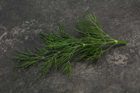 Fresh green dill herb branch ready for cooking Stok Fotoğraf