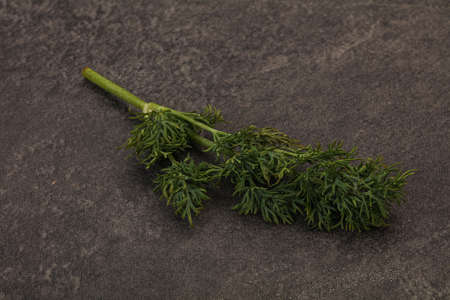 Aroma seasoning - Green Dill branch over background Stok Fotoğraf