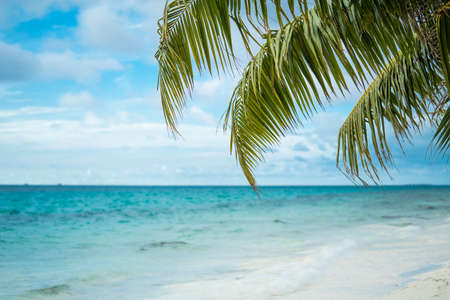 Best beaches in the world. Thailand Islands Palms on the ocean. palms grove on the beach with white sand. Blue sea and beach and sky. Summer landscape