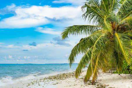 Maldives. Natural tropical Sea Beach landscape. Crystal clear sea wave and white sand beach. Relax on clean sunny Sea Beach long loop Archivio Fotografico