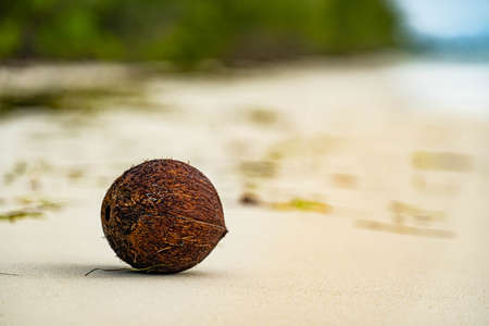Maldives. Tropical Coco nut closeup. Ocean background. Healthy Food, skin care concept. Paradise place