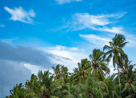 Summer concept on the beach with palm tree stock video. It sunny day by the ocean. Beach and sea and palm tree landscape. Tropical nature without people, copy space. Archivio Fotografico