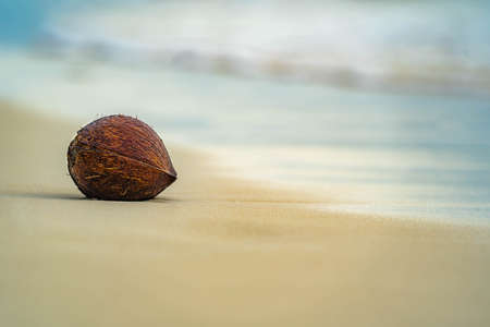 coconuts whole, beautiful background
