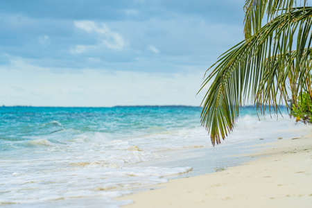 Amazingday on beach palms island. Beautiful waves. Nature sun sunrise palms beach background. Yellow sky, beautiful palm trees on the beach isle. Sunshine