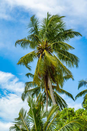 View of the Palm Trees Passing by Under Sunny Blue Skies. Wide Shot of Driving with Camera Looking up at Palm Trees