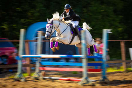 cavallo che salta: horse jumping