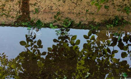 reflection: tree reflection