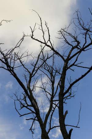 frightful: scary tree