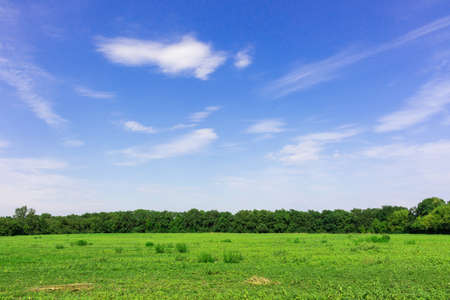 copse: Just the beauty and freedom of
