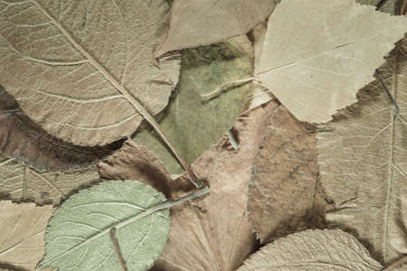 fading: the background of the old fallen leaves