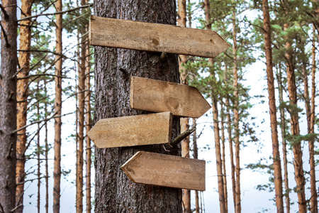 Blank wooden directional signs on tree trunk in forest