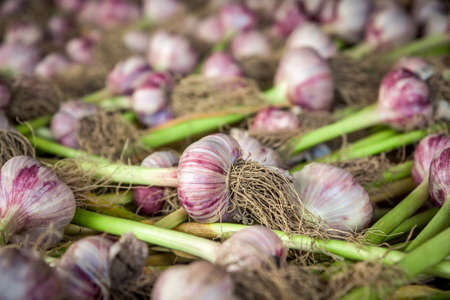 bulb and stem vegetables: garlic bulbs Stock Photo