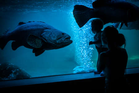 Amazed child with mother watching at big fish in public aquarium. Silhouettes standing in front of fish tank and fish stared at them