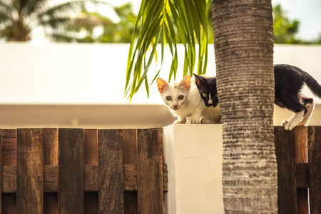 Curious kittens sitting on wooden fence looking out from tree trunk