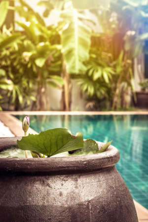 Swimming pool area with decoration bowl with water lily among lush tropical garden with sunshine at private luxury tropical villa backyard Imagens