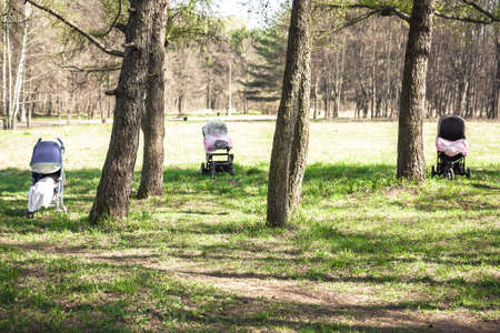 Children sleeping outdoors in forest with fresh air in strollers during sunny summer day