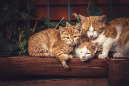 Cute red cats family together with kitten resting on wooden logs in rural countryside village in vintage rustic style Imagens